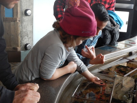 Minerva Siemer checks out sea life at the Monterey Bay Aquarium