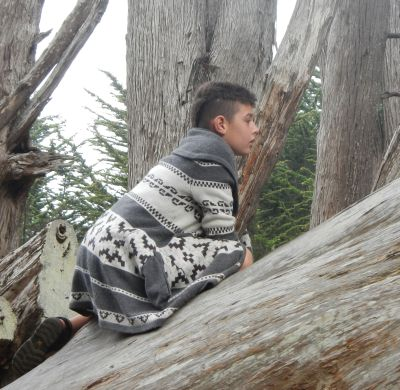Kyan Baker in a tree